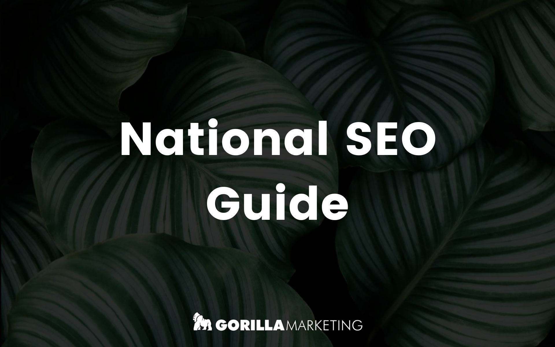 National SEO Guide