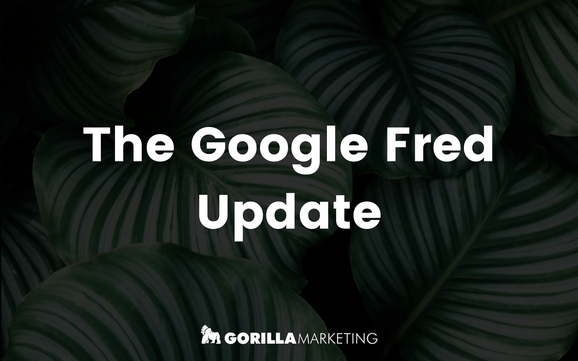 The Google Fred Update
