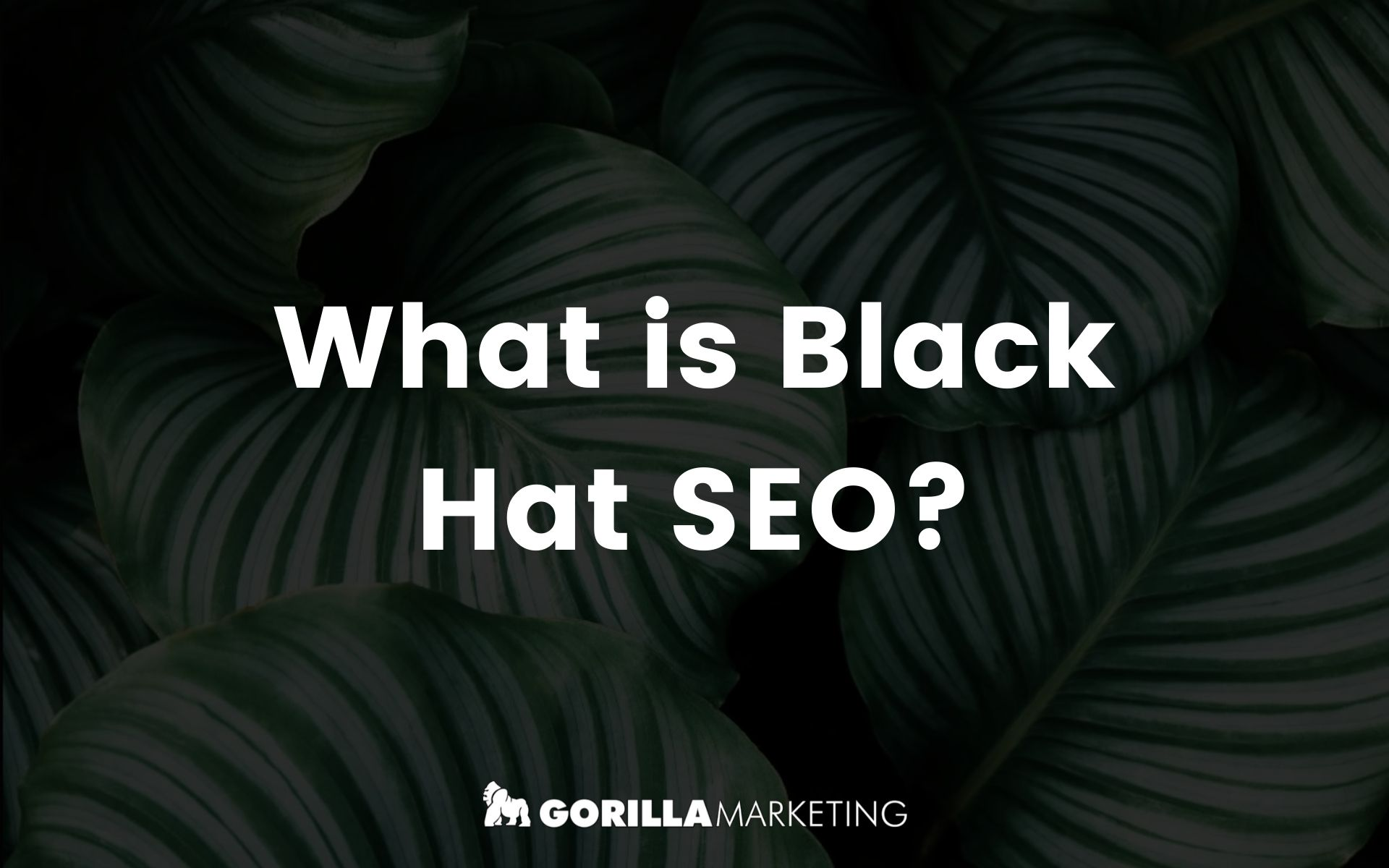 What is Black Hat Search Engine Optimisation