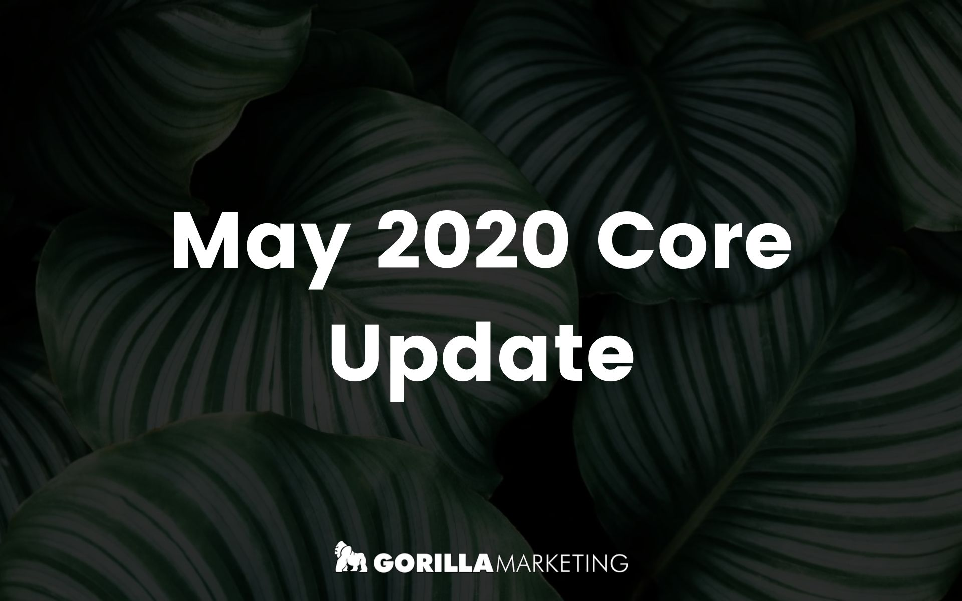 The Google May 2020 Update
